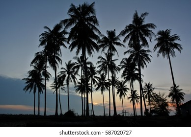 Silhouetted coconut tree during sunrise in Pahang, Malaysia.