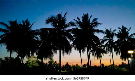 Silhouetted of coconut tree during sunset (palm)