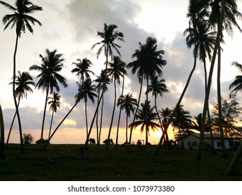Silhouetted coconut trees with a sunrise background.