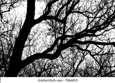 silhouetted curly tree, in b&w