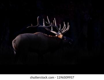 silhouetted elk w grass in Cataloochee.psd