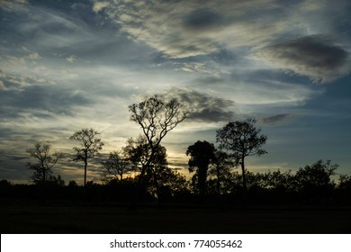 Silhouetted native trees with dramatic cloud formation at sunset Asia.