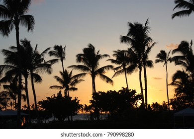Silhouetted palm trees and bushes against a stunning sunset in Waikoloa Village, Hawaii, USA