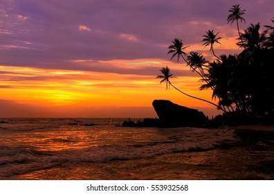 Silhouetted palm trees and rocks at sunset, Unawatuna, Sri Lanka