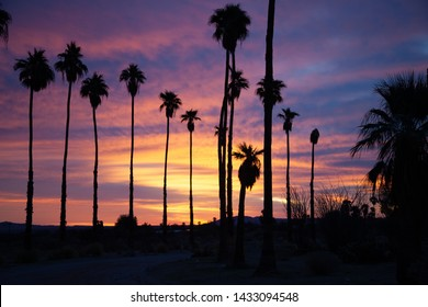 Silhouetted palm trees at sunrise in Borrego Springs, California in the desert