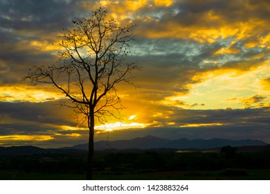 silhouetted tree with beautiful cloud sky at sunset background