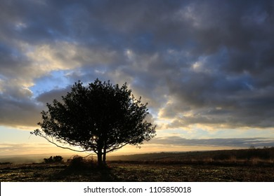 Silhouetted Tree on Ashdown Forest at Sunset, Sussex, UK