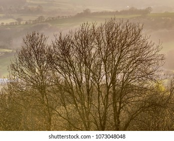 A silhouetted tree on the Herefordshire Downs in England