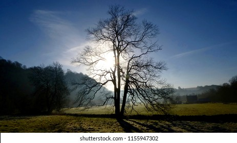 Silhouetted Tree in Winter