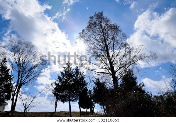 The silhouetted trees against the blue sky.