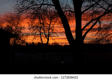 silhouetted trees against an early colourful morning sunrise