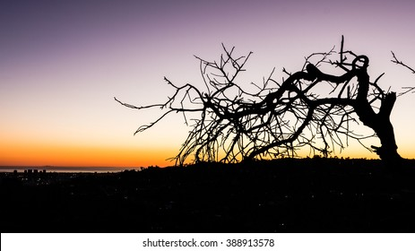 Silhouetted trees without leaves in twilight background ( color gradient from red to blue)