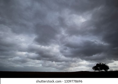 Silhouetted windswept stunted tree on farm grassland field in rural Hampshire against dramatic rain clouds