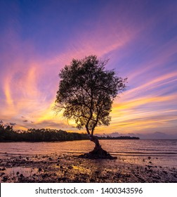 Silhouettes of Avicennia officinalis trees and amazing cloudy sky on sunrise at tropical beach in Thailand.