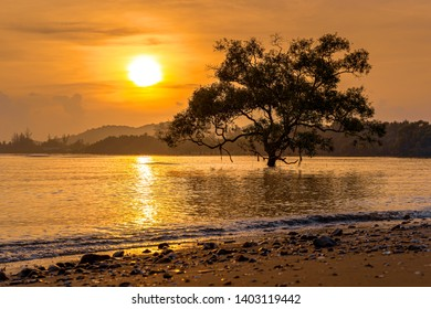 Silhouettes of Avicennia officinalis trees and golden light at tropical beach in Thailand