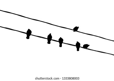 The silhouettes of the birds on the wires