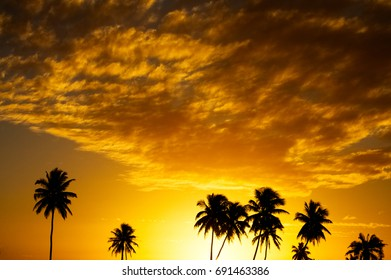 Silhouettes of coconut tree at sunset