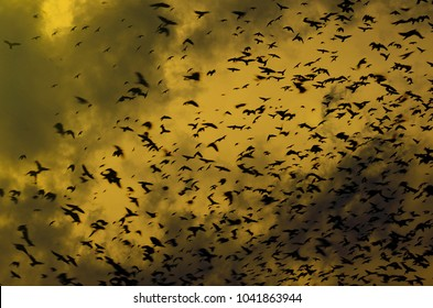 silhouettes of crows on dramatic sky background with clouds. A flock of black birds flying in the sky. Birds fly in a very terrible sky. Birds of ghosts in the orange sky