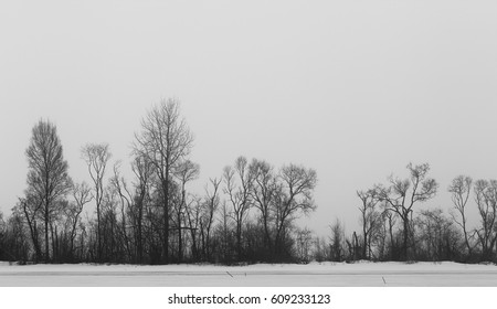 silhouettes of defoliage trees in winter time, black and white photo