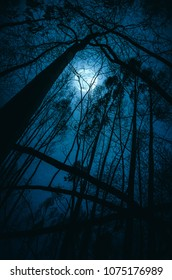 Silhouettes of distorted trees in a full moon night