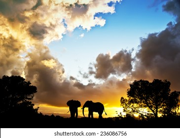 silhouettes of elephants through the trees