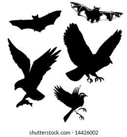 silhouettes flying birds and bats
