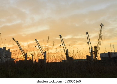 Silhouettes of giant cranes
