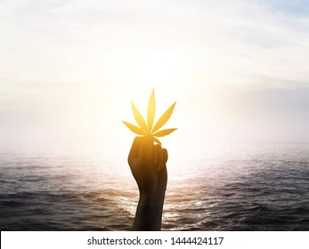Silhouettes of hands marijuana leaf at sunset, Marijuana for medical concept.