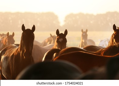 silhouettes of horses in the herd at dawn in the summer in the meadow