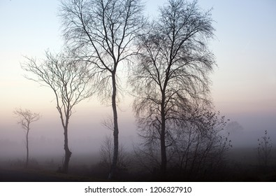 silhouettes of leafless birch trees next to a small rural road in front of a mystic fog that is rising over the moorlands while dawn