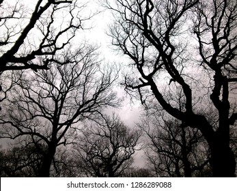 The silhouettes of memorable trees from a creepy forest.
