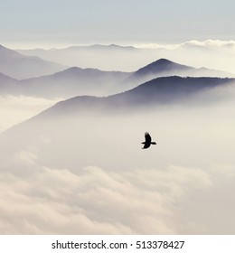 Silhouettes of mountains in the mist and bird flying in warm toning square crop