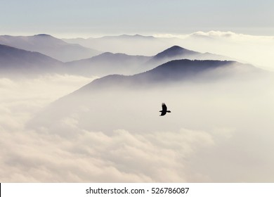 Silhouettes of mountains in the mist and bird flying in warm toning