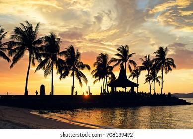 Silhouettes of palm tree during sunset in Kota Kinabalu beach, Sabah Borneo, Malaysia.