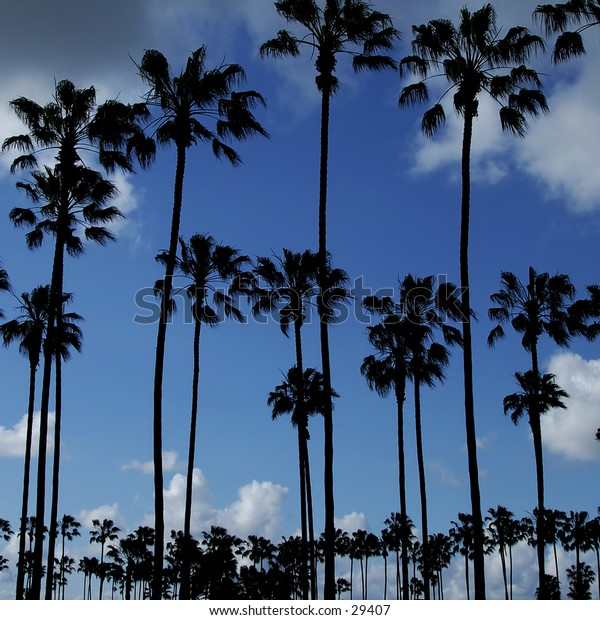Silhouettes of palm trees against a clear blue sky