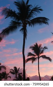 Silhouettes of palm trees in the pink and blue evening sky in Maui, Hawaii