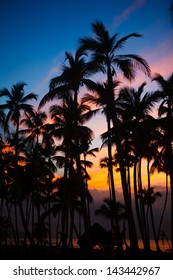 silhouettes of palm trees in twilight