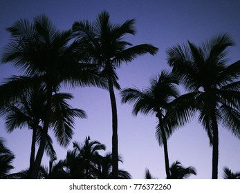 Silhouettes of palms on the background of the night sky