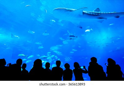 Silhouettes of people and giant whale shark of fantasy underwater in Oceanarium