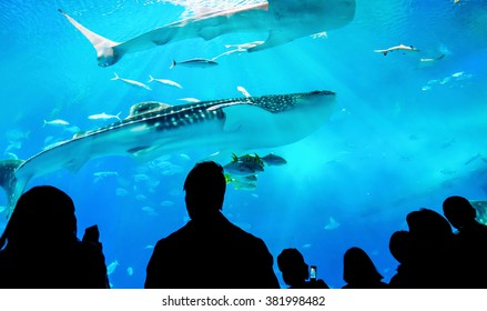 Silhouettes of people and giant whale shark of fantasy underwater with dramatic light ray in Oceanarium