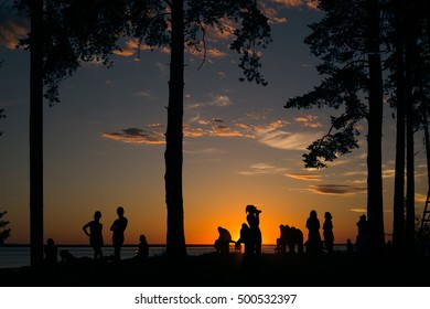 Silhouettes of people and trees at sunset in the forest. In the center of silhouette of a man with a camera. All are on the edge of the cliff, looking into the distance. Around the forest and the sea.