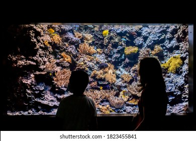 Silhouettes of people watching the aquarium sea life