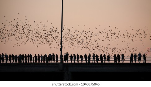 Silhouettes of people watching bats at Congress Avenue Bridge