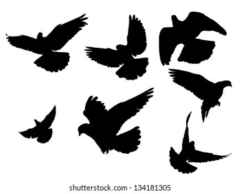 Silhouettes of pigeons in many different flying positions and angles