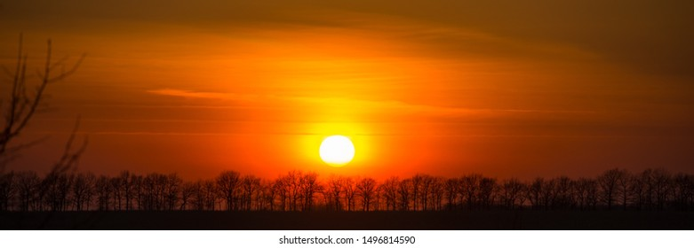 Silhouettes of pine trees at sunset. Spring season. Web banner.