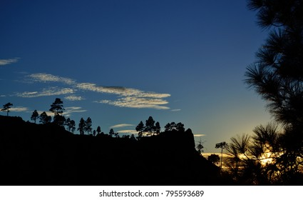 Silhouettes of pines at sunset, vivid blue sky and clouds, Pilancones, summit of Gran canaria, Canary islands
