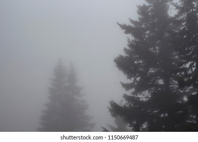 Silhouettes of pines trees in fog. The image is captured in the mountain called Sis of Trabzon city located in Black Sea region of Turkey.