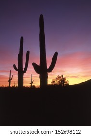 Silhouettes of saguaro in the western sky of pink, blue, purple and gold.silhouettes of saguaros/ Depending on how dirty the sky is will factor what color the sunrise or set  on the Arizona desert.