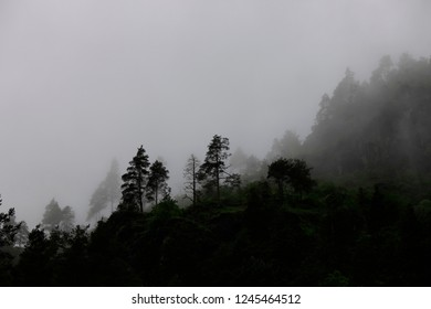 Silhouettes of spruce trees in the mountains in the fog