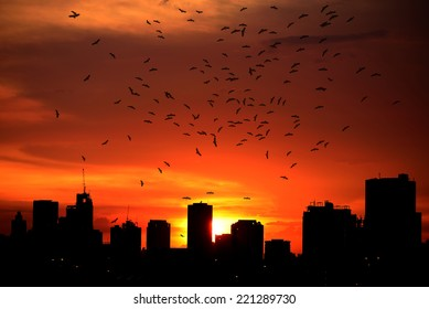 Silhouettes Sunset in the City and The flying bird.